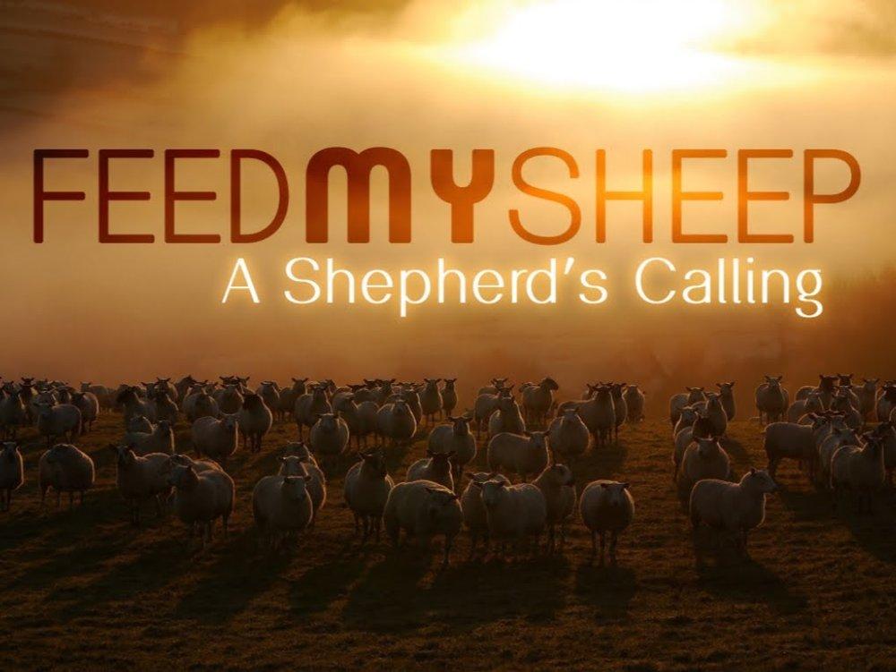 Feed My Sheep 1.jpg