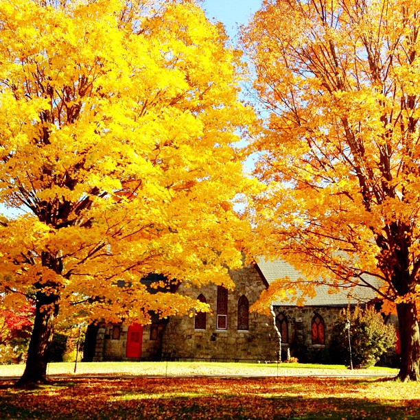 #fall #autumn #newyork #church #yellow