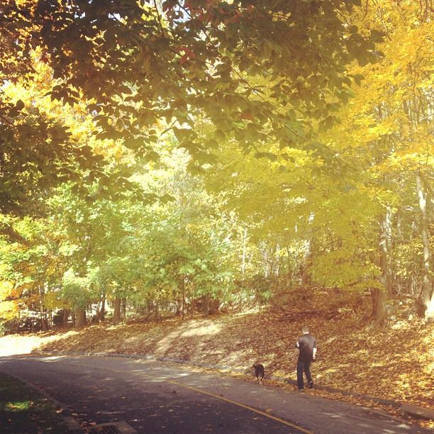 #brother #dog #fall #newyork