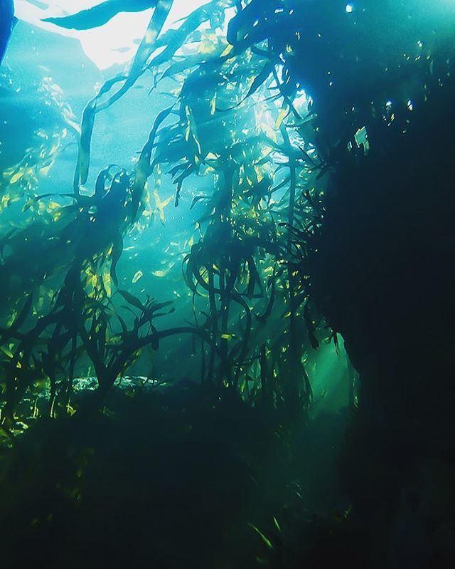 Light movement in the kelp forest
