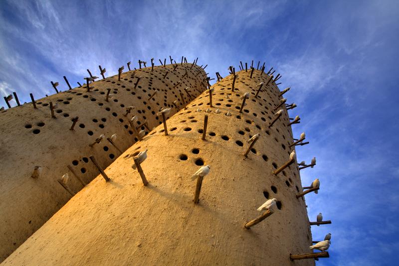 Doha Pigions.jpg