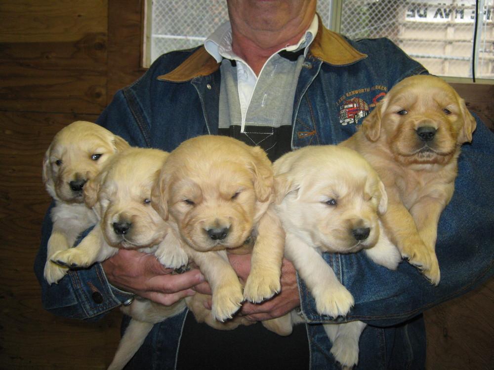 Pups Oct. 9 001.jpg