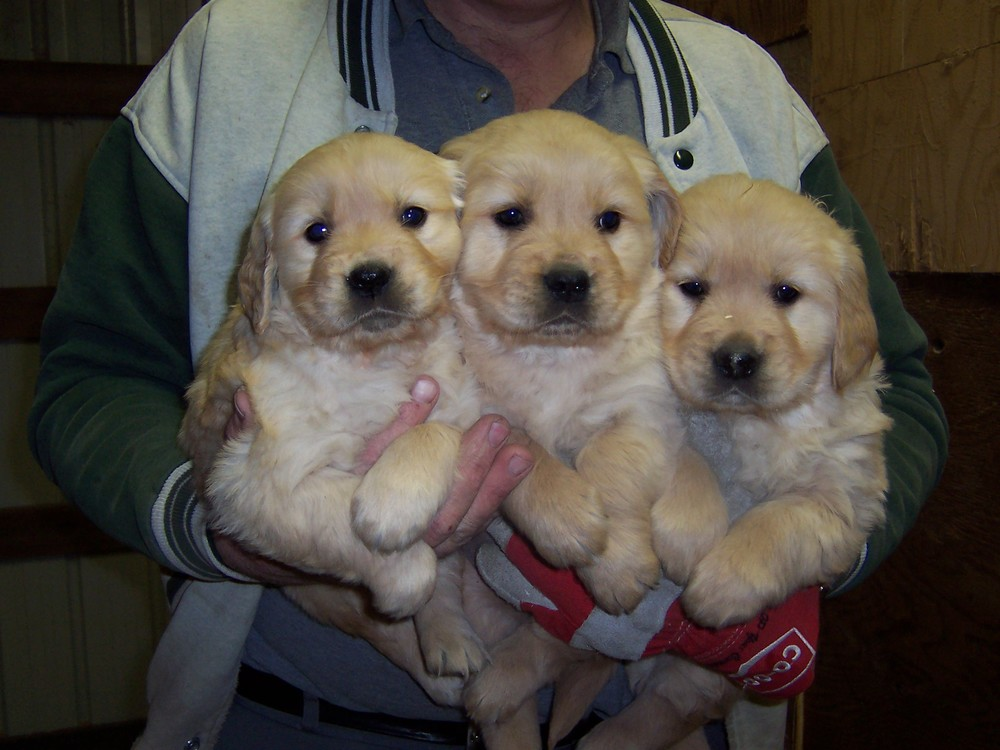 Puppies 005.jpg