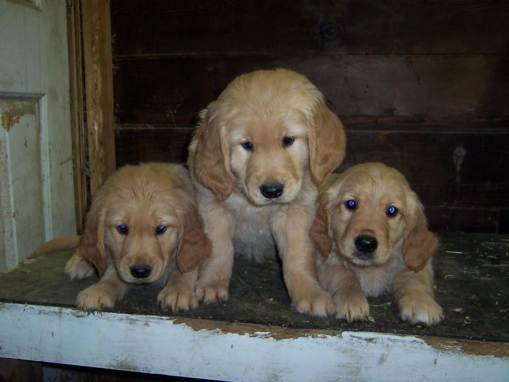 Pups 2009 010.jpg