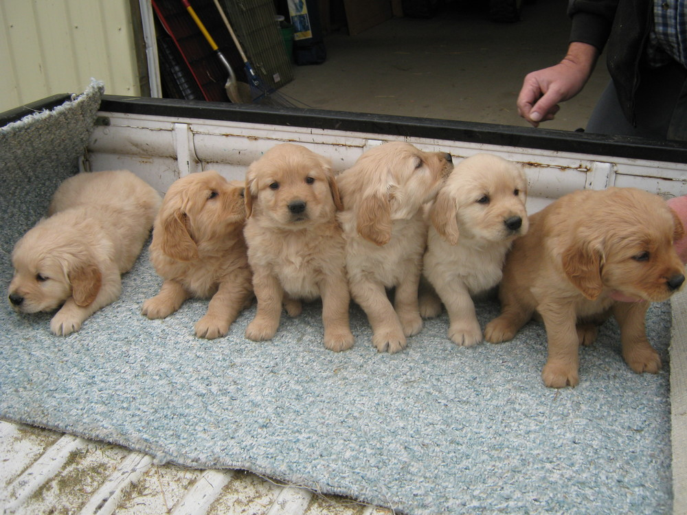 Pups Oct. 28 001.jpg
