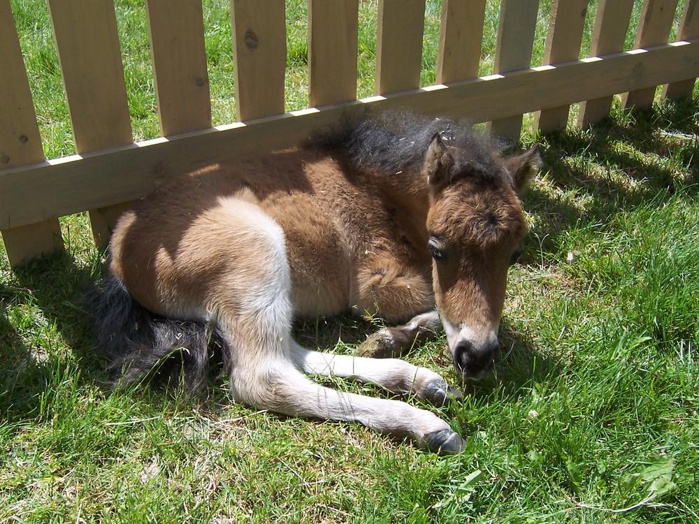 Petting Zoo 004.jpg