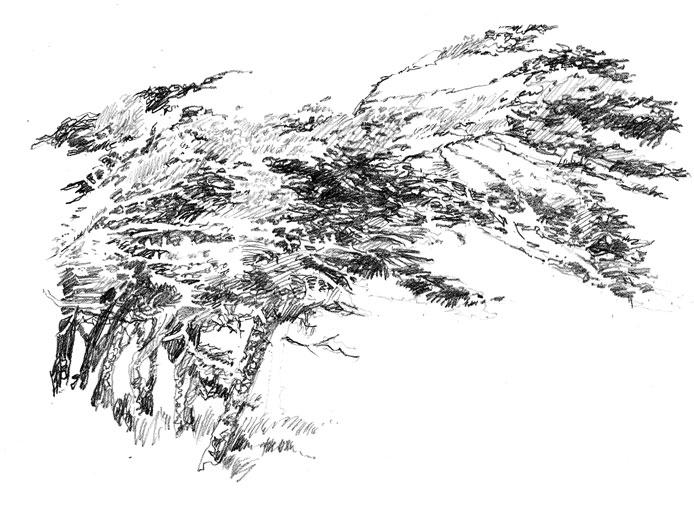 acacacatrees.jpg