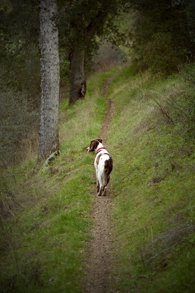 Hike Patrol