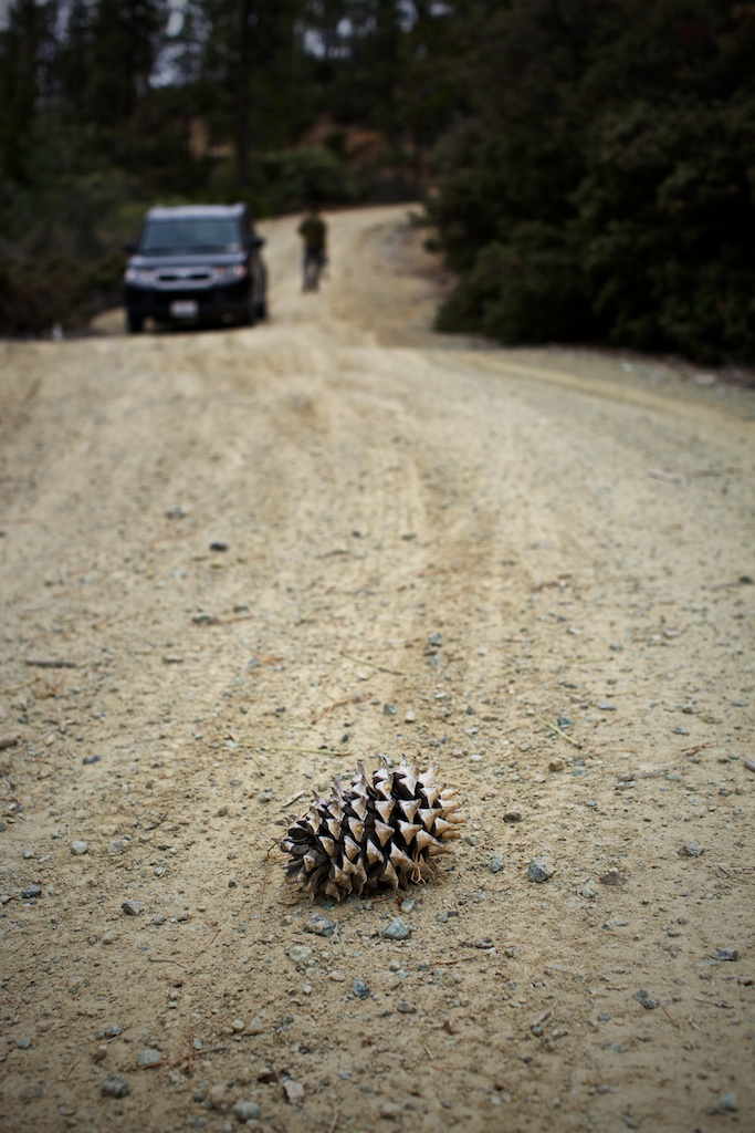 Pine Cone Road