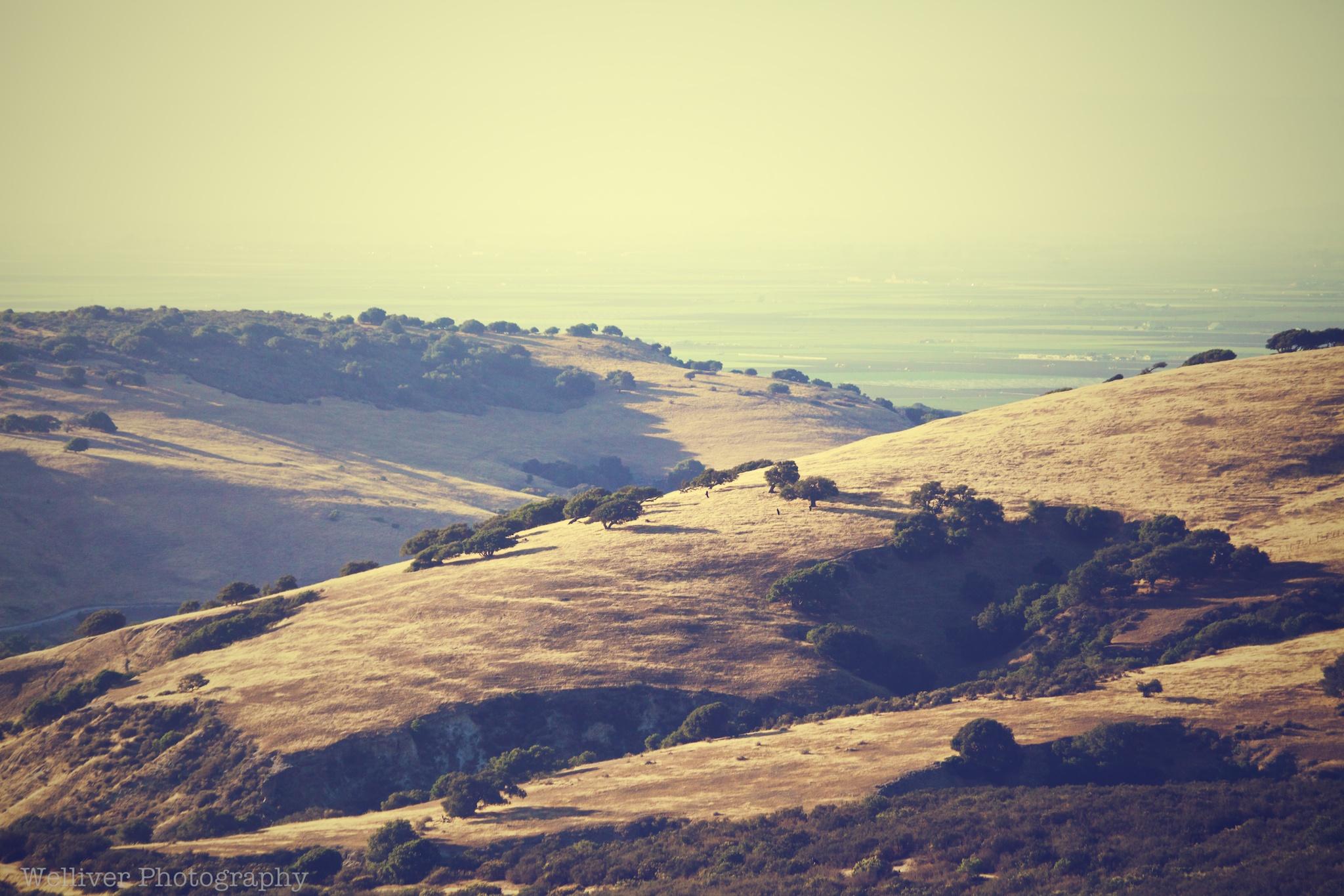 Toro Hills
