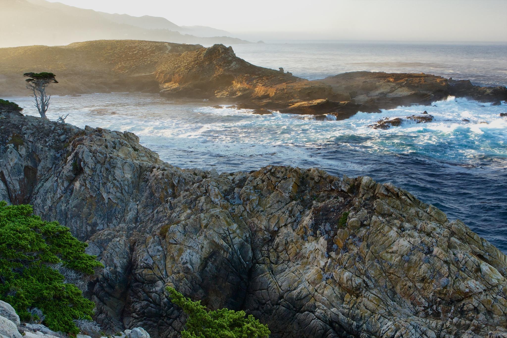 cypress coast