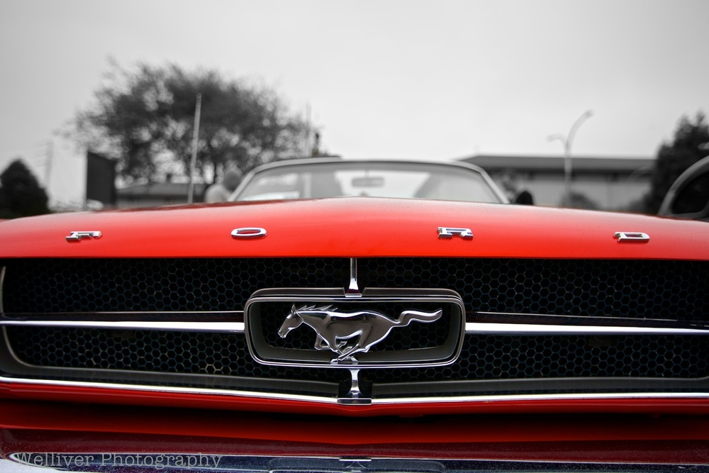 Monterey, CA: Mustang by Terry.