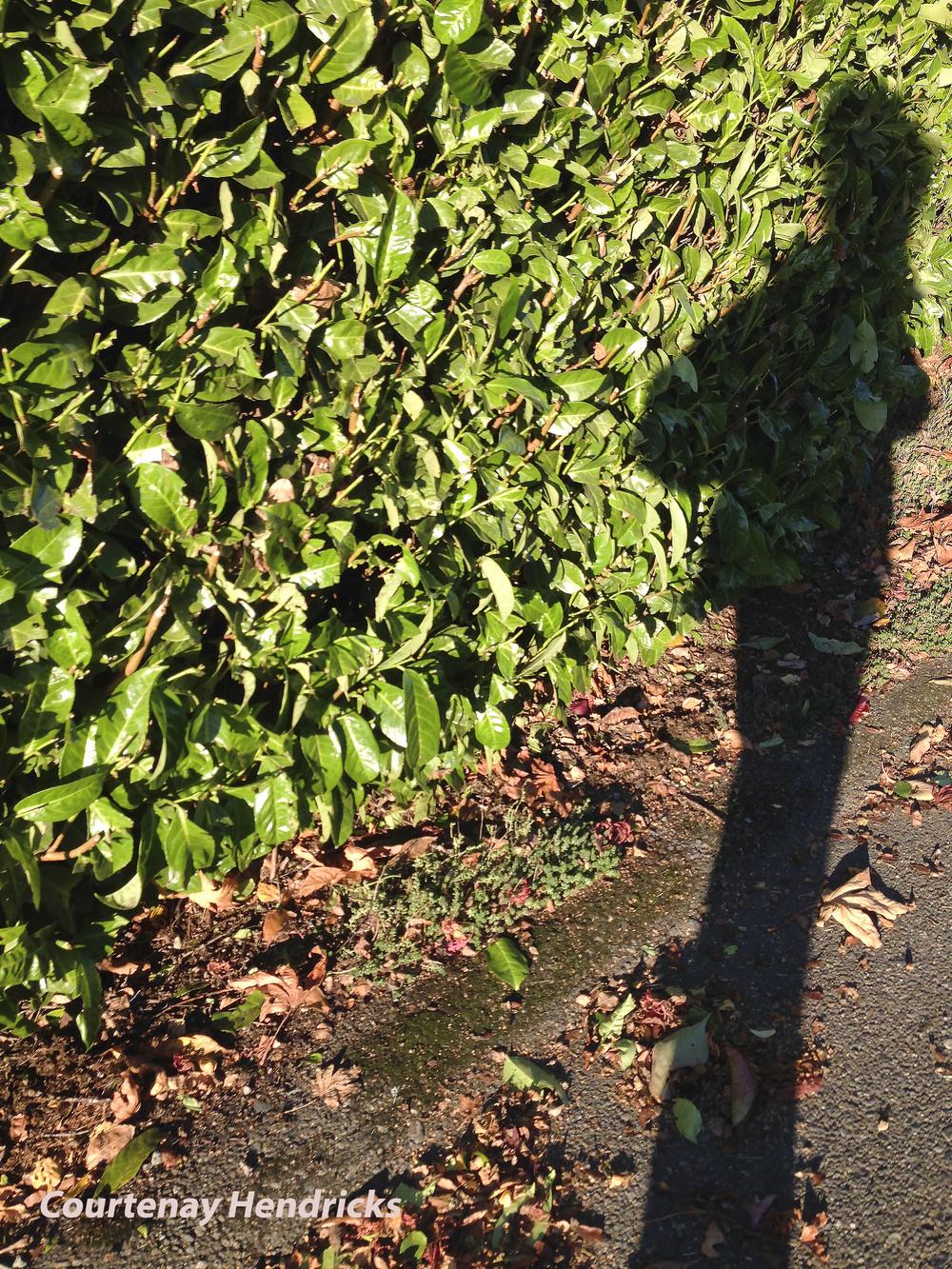 Chendricks_HCPblog_Spring_shadow.jpg