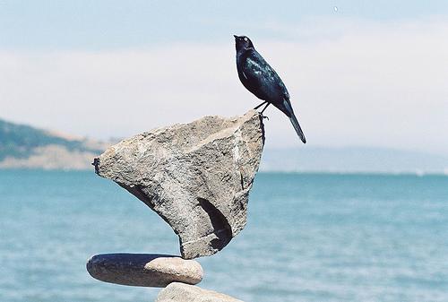 balancingbird1.jpeg