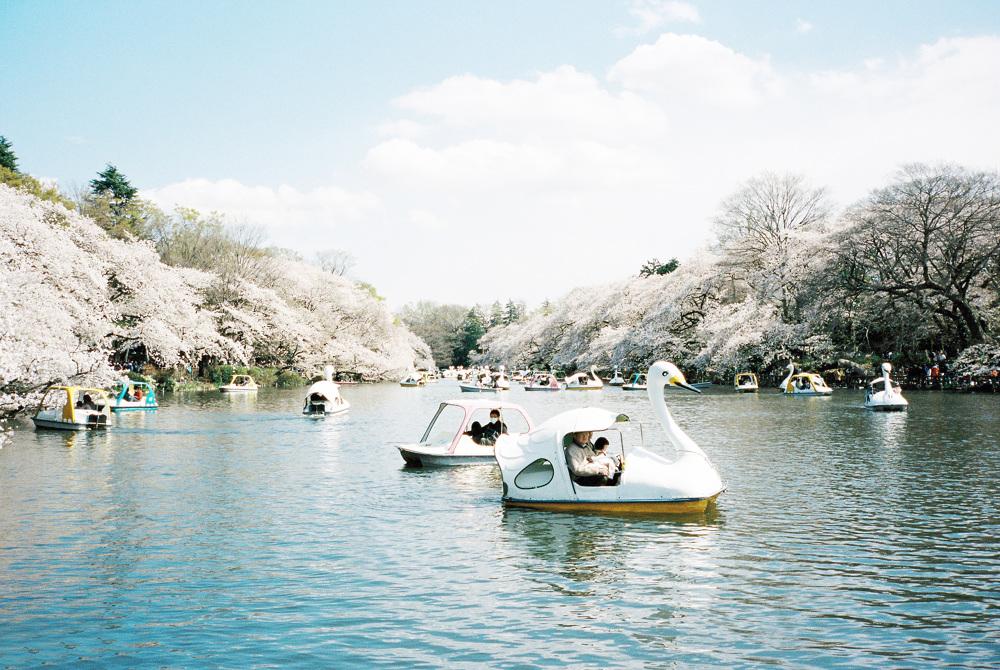 LEILA PETERSON —satsuki shibuya . journal