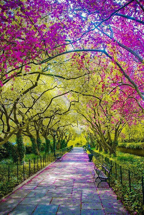 A walk in Central Park, New York