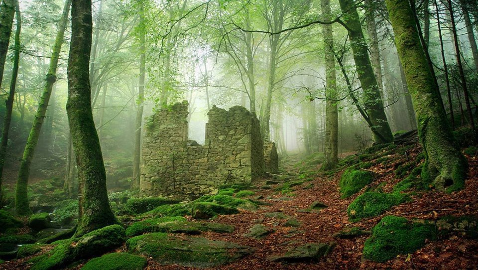 An old church in the forest, Nottingham, England