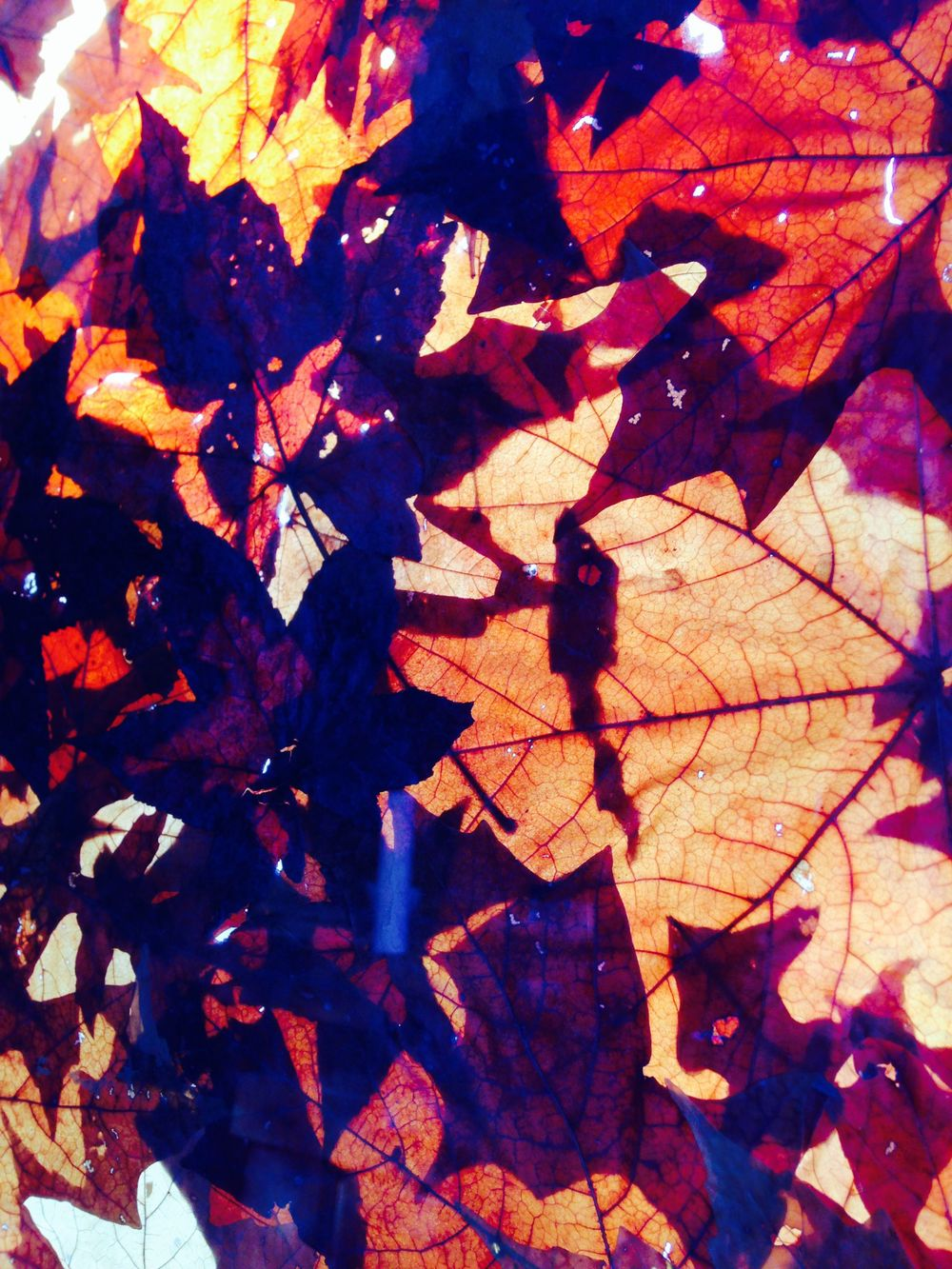 This is actually a glass tray, with fall leaves pressed between two panes of glass, held up to a window.