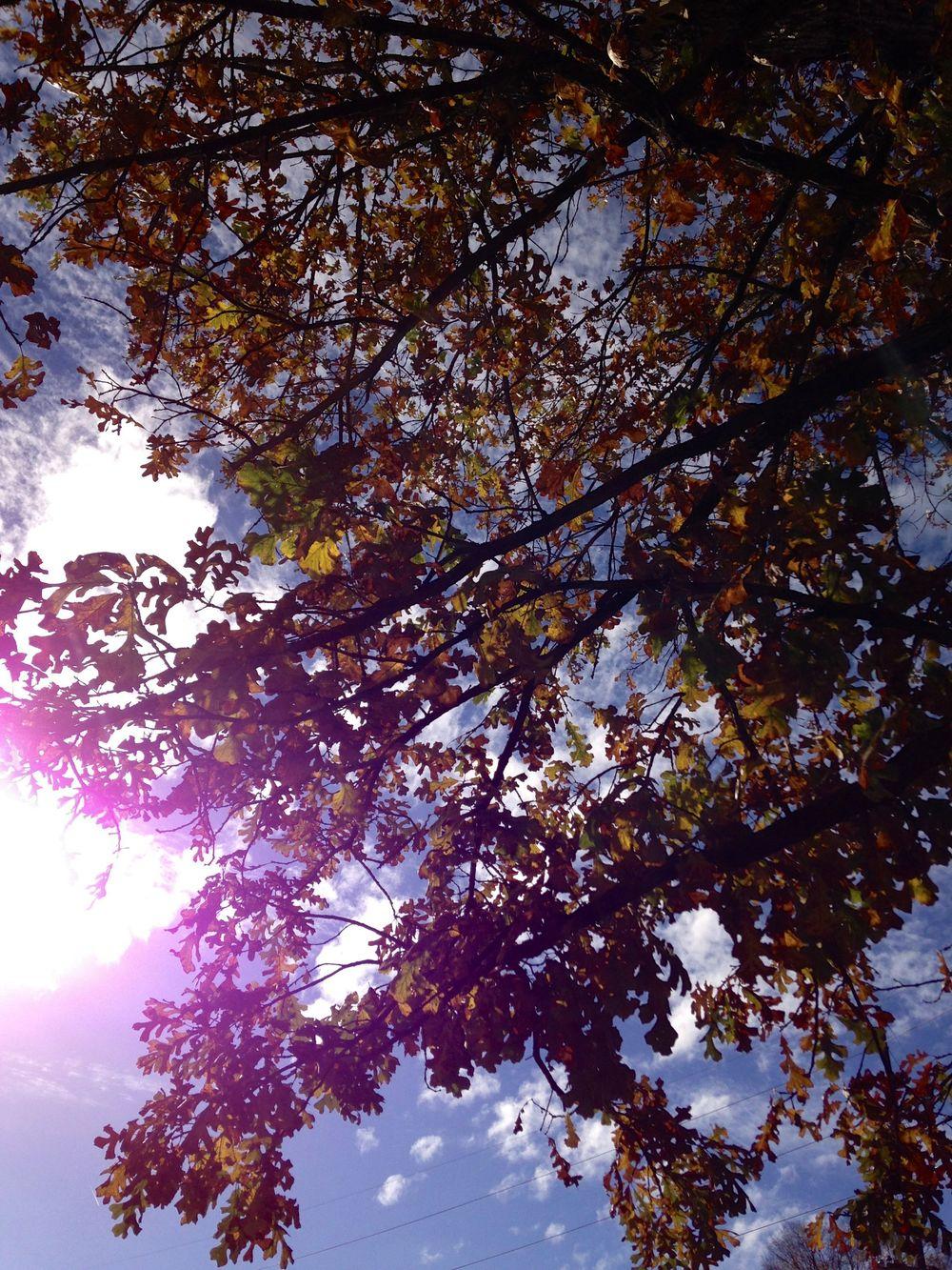 Sun Through Tree.jpg