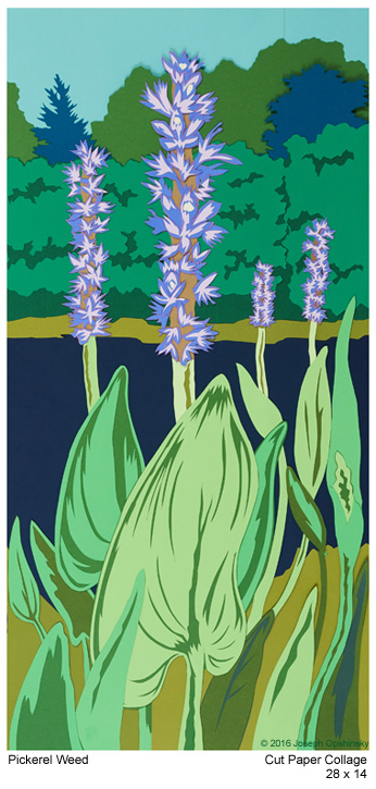 Pickerel Weed (2017)