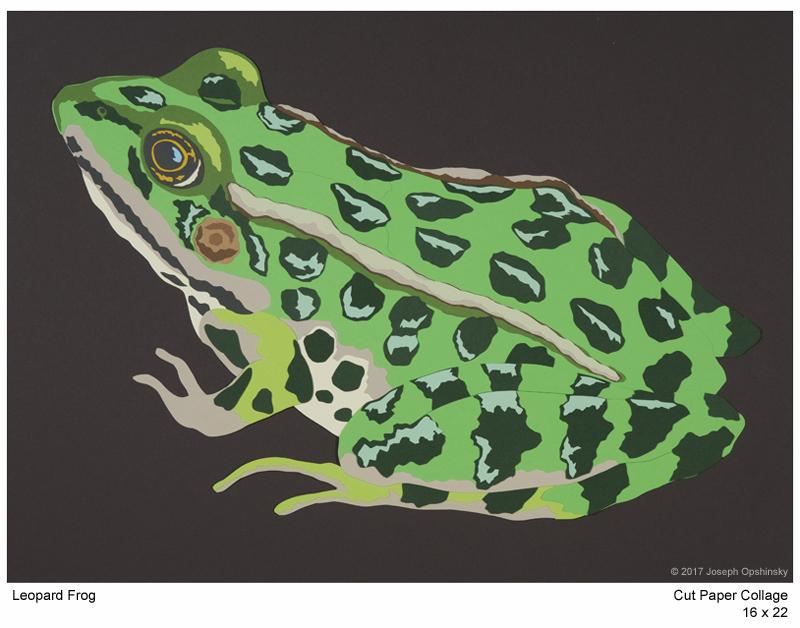Leopard Frog (2017)