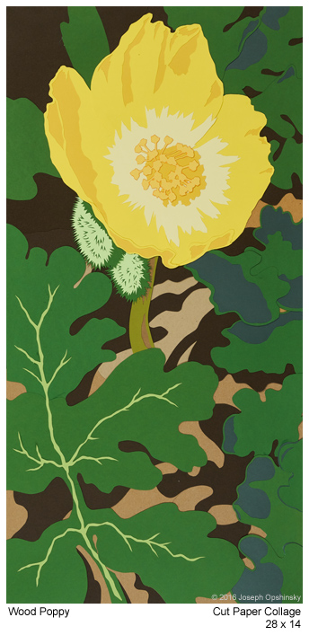 WoodPoppy-2016.jpg