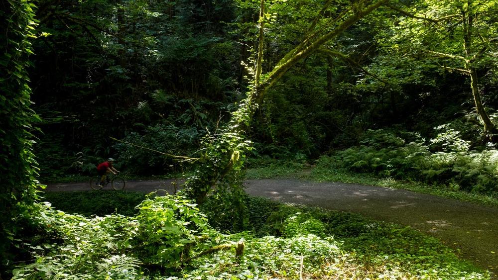 ForestPark_00005.jpg