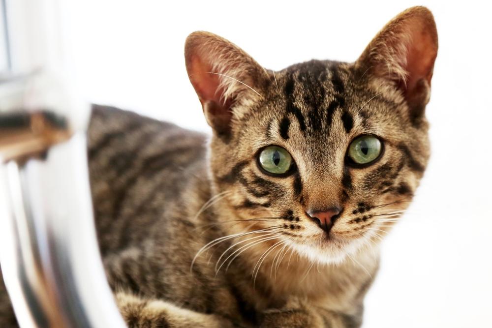 house-cat-1200204.jpg