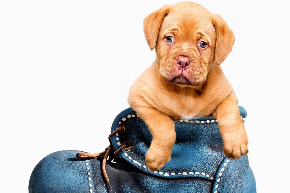 puppy-1154468.jpg