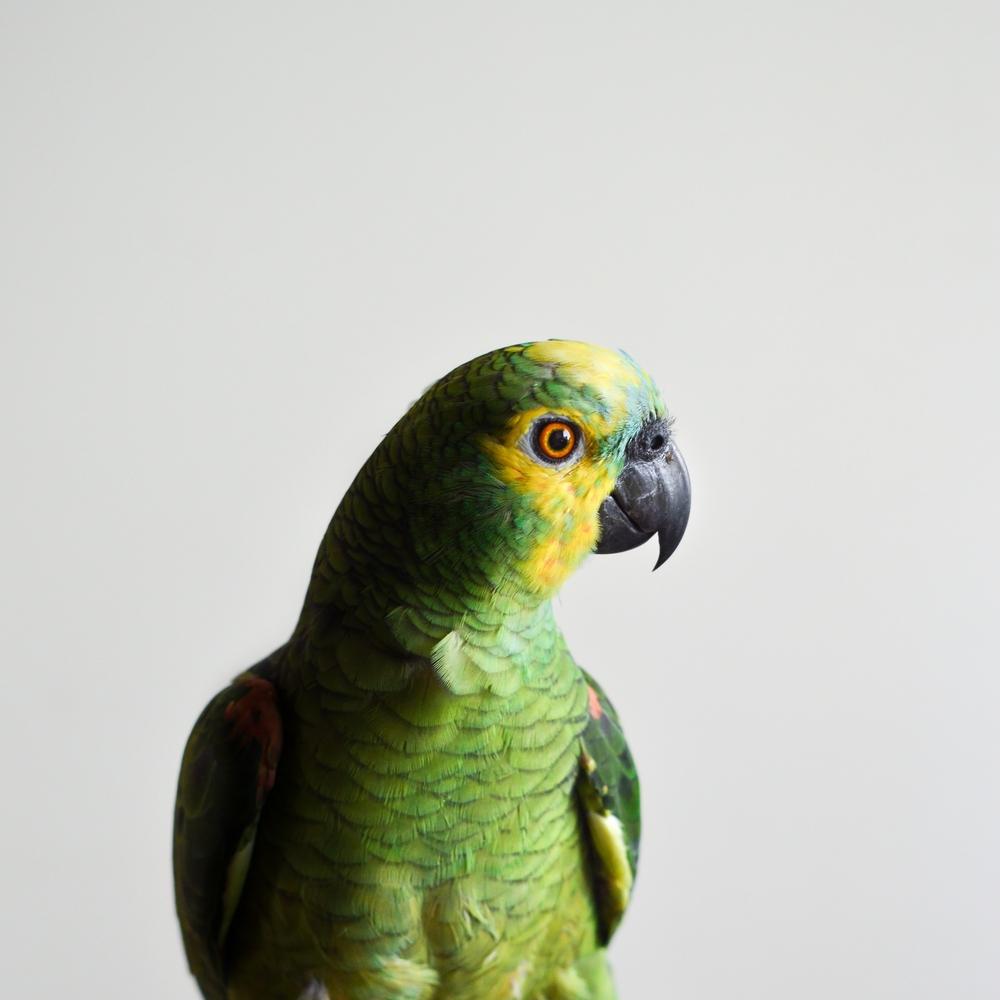 bird-1284082.jpg