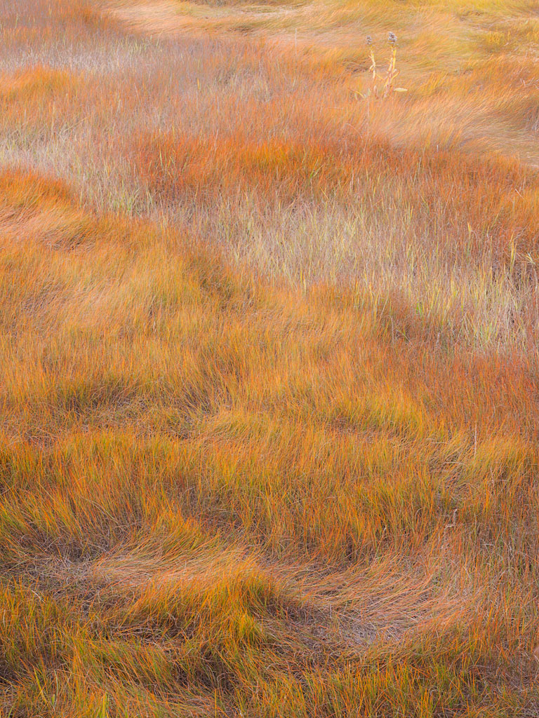 Acadia Grasses by Paul Osgood