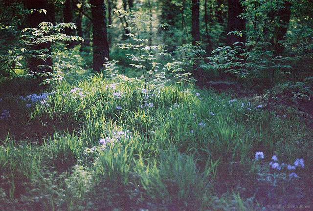 ©heathersmithjones_film_spring.jpg