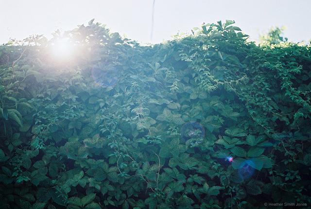 ©heathersmithjones_film_summergrowth.jpg