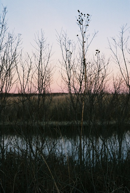 ©heathersmithjones_wetlandsfilm9.jpg