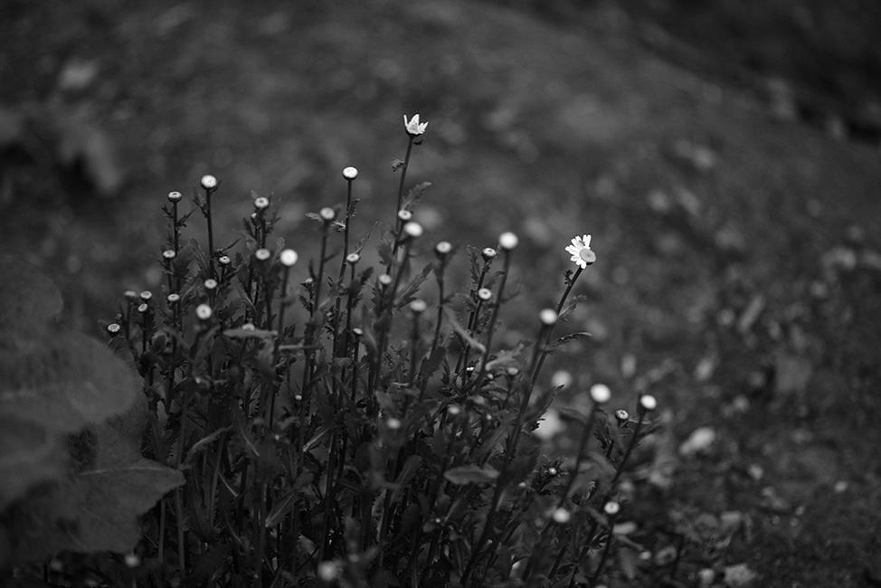 ©HeatherSmithJones_nightgarden_592014_3.jpg
