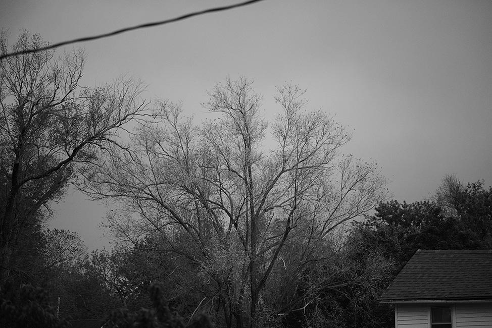 ©HeatherSmithJones_nightgarden_592014_4.jpg