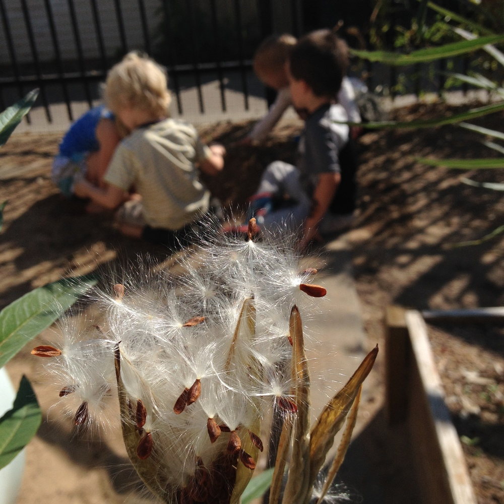 A beautiful morning in the preschool garden and playground.
