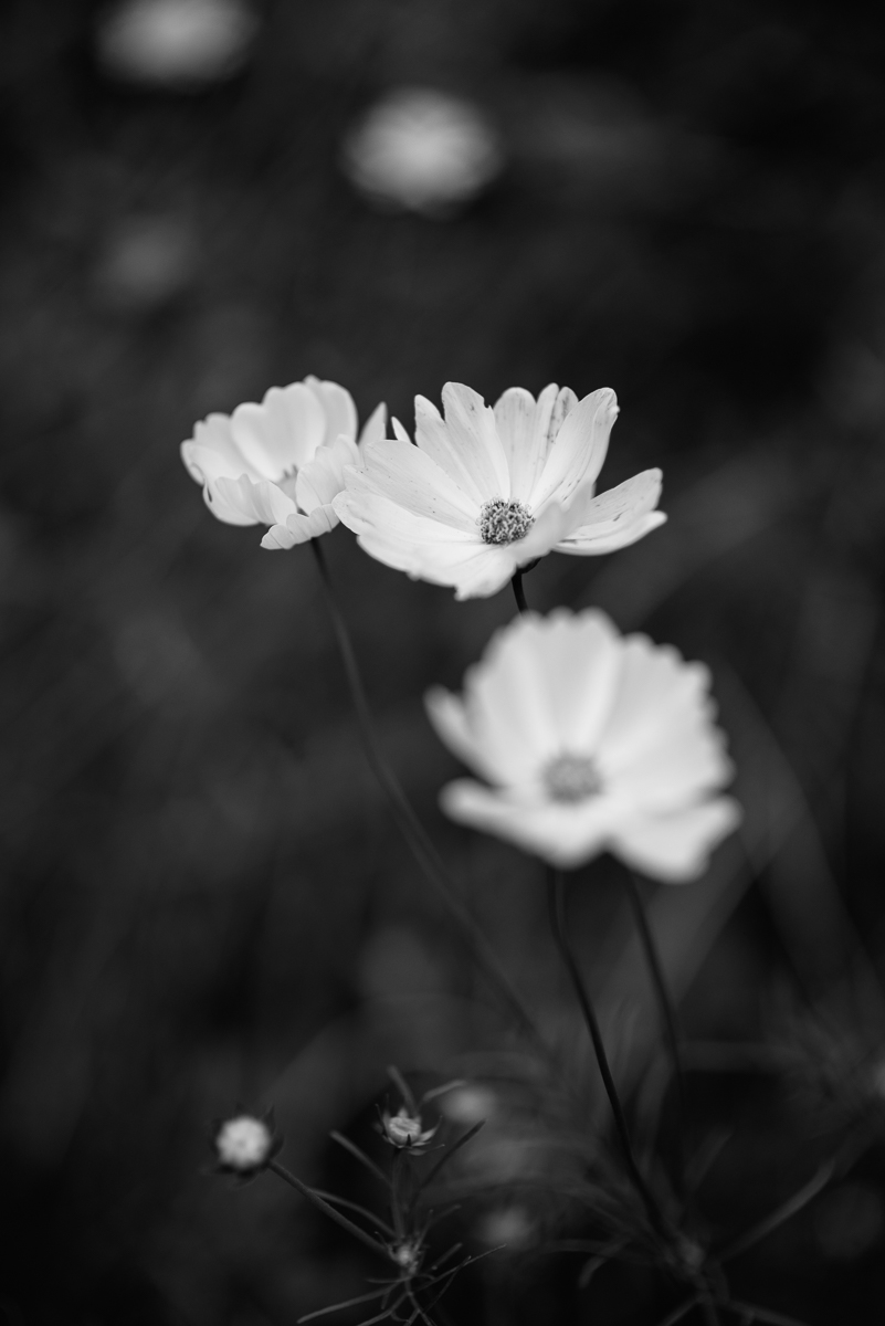 ©HeatherSmithJones_gardenbw_Oct514-5.jpg