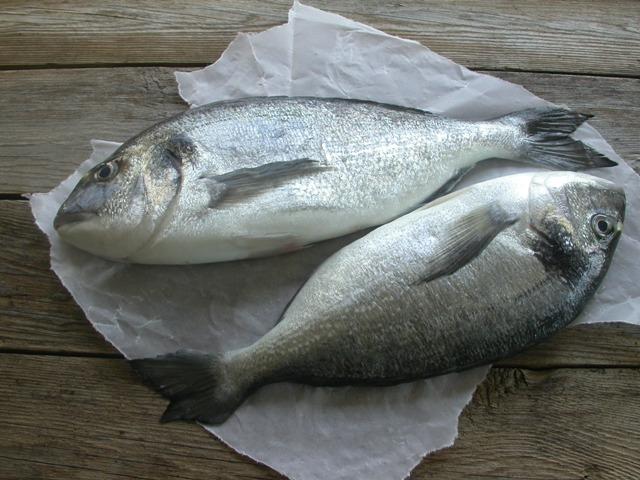 Spis fisk
