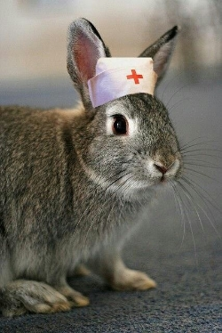 Bunnynurse to the rescue!