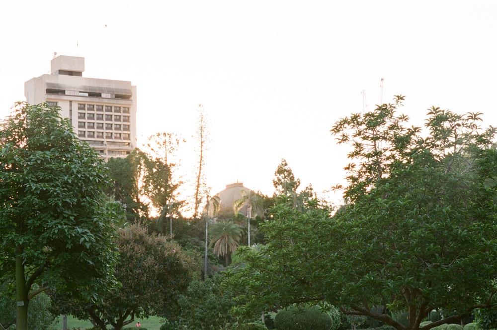 Brisbane Botanical Gardens-29.jpg