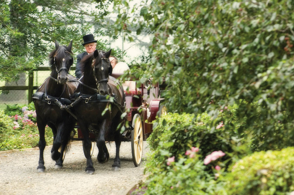 wedding-horse-and-carriage.jpg