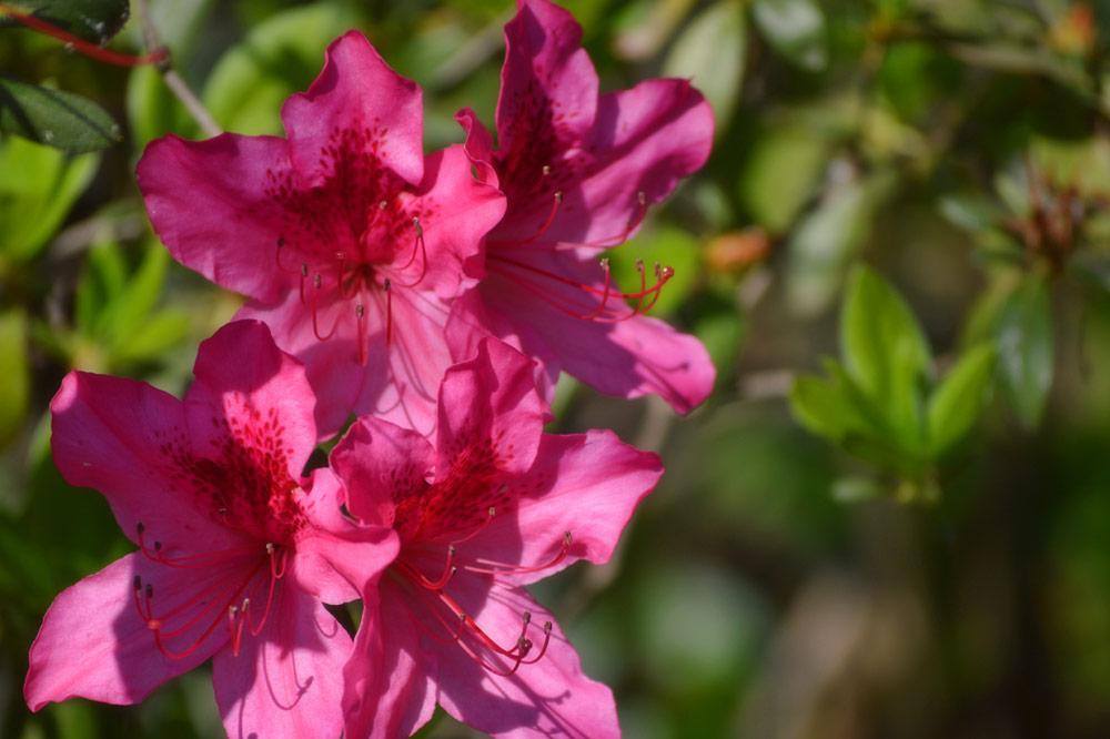 flowers-in-spring.jpg
