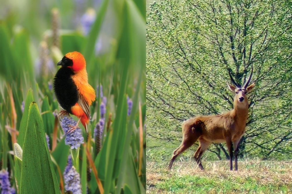 bird-and-buck.jpg