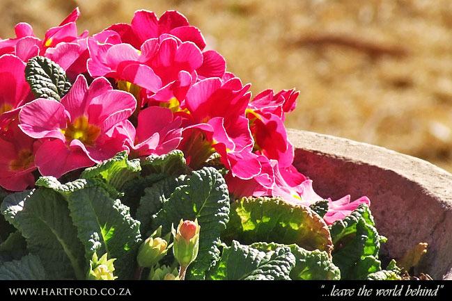 hartford-spring-garden-10.jpg