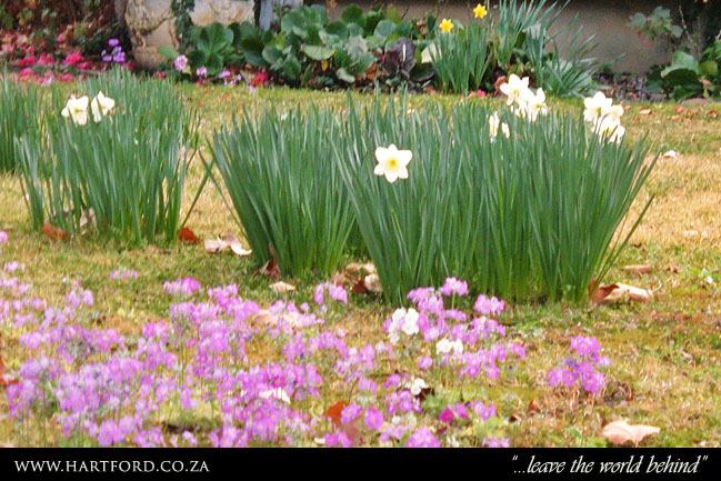 hartford-spring-garden-6.jpg