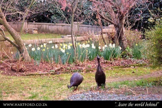 hartford-spring-garden-1.jpg