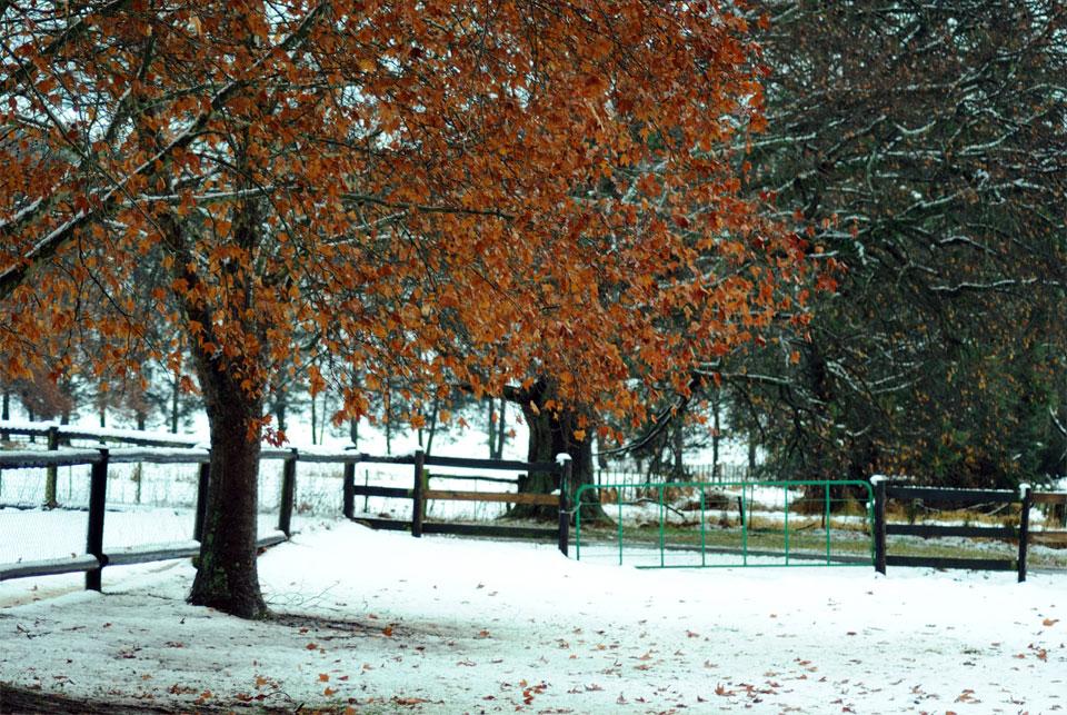 kwazulu-natal-snow-33.jpg