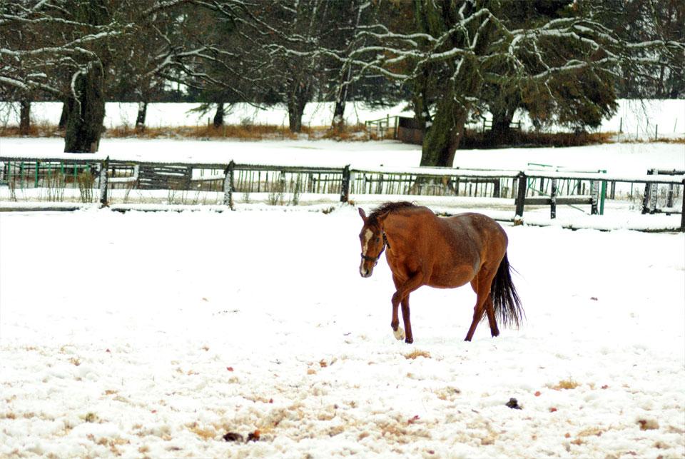 kwazulu-natal-snow-34.jpg