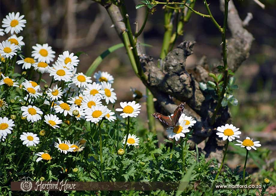 KZN Midlands Spring Flowers 19